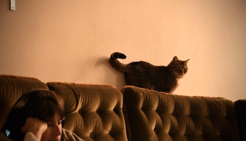 Un chat marche sur un divan
